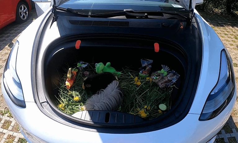 Frohe Ostern im Tesla Model 3 Frunk mit den Meerschweinchen Schnufelpufel und Brownie